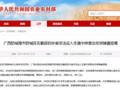 农业农村部通报:广西外省非法运入生猪中排查出非洲猪瘟疫情