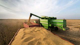 中企暂停新的农产品采购 美大豆价格已下跌近10%