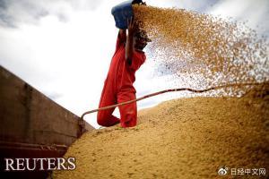 巴西对华大豆出口锐减 拖累经济